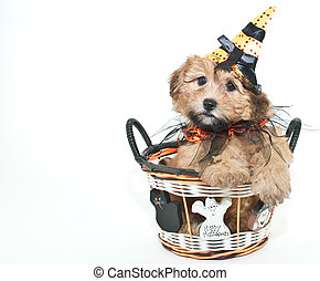 Halloween Puppy - Silly puppy wearing a witch hat sitting in...