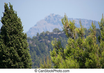 Cypress and pine trees closeup with blurry mountains behind...