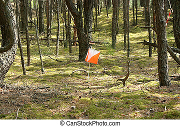 Closeup of Orienteering marker in the forest