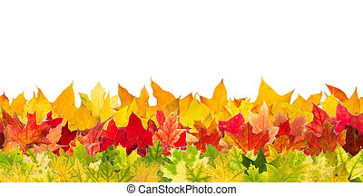 Seamless autumn maple leaves - Seamless pattern of colour...