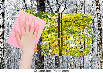 hand deletes bare trunks in winter forest by cloth - season...