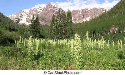 Maroon Bells in Summer - the scenic landscape of the maroon...