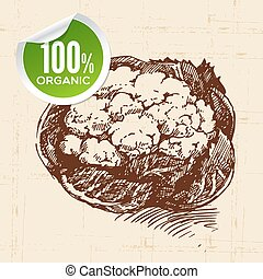 Hand drawn sketch vegetable cauliflower Eco food...