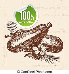 Hand drawn sketch vegetable zucchini. Eco food...