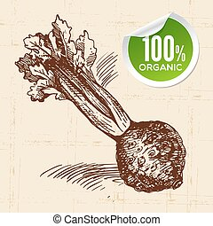 Hand drawn sketch vegetable celery Eco food backgroundVector...