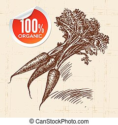 Hand drawn sketch vegetable carrots Eco food...