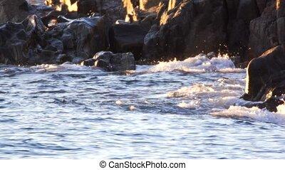 river otter runnig over rocks