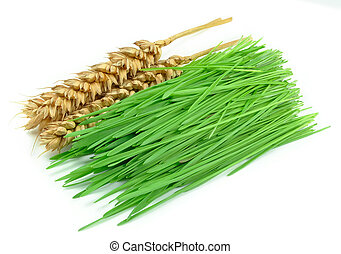 wheat grass and ears isolated on a white background