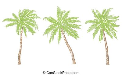 Palm trees - Set of 3 watercolor palm trees on white...