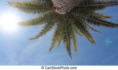 Palm tree, blue sky and sun