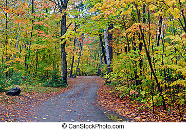 Colorful trees in Killarney Park in fall time, Canada