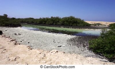 Mangraves in Egypt - Mangrove Bay in Ras Muhammad National...