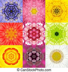 Colección, Conjunto, nueve, flor, Mandalas, vario, colores,...