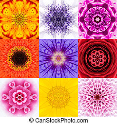 Collection Set Nine Flower Mandalas Various Colors...