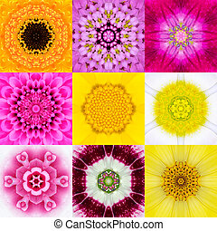 Colección, Conjunto, nueve, flor, Mandalas, vario,...