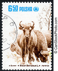 postage stamp - POLAND - CIRCA 1981: A Stamp printed in...