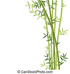 Green bamboo on white background, vector illustration