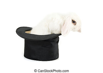 Magic - Little rabbit at magic hat isolated on a white...