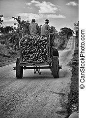 Marabu road - Los campos de Cuba se han poblado de Marabú...