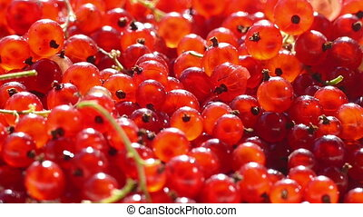 Red currants in a bowl sprinkling hd