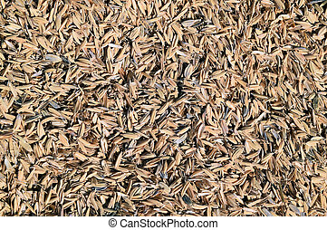 Rice peel. Background. - The detail of rice husks for...