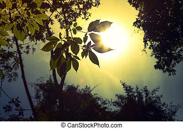 Forest trees Filtered image processed vintage effect