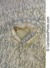 Natural heart on a tree trunk - Abstract symbol of love on a...