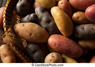 Raw Organic Fingerling Potatoes in a Basket