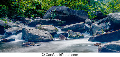 broad river flowing through wooded forest