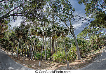 beach scenes at hunting island south carolina - beach scenes...