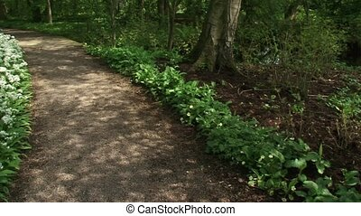 Deciduous forest pan ramsons path - Deciduous forest pan...