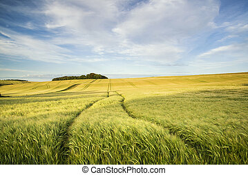 Summer landscape over agricultural farm field of crops in late afternoon