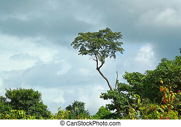 african landscape - african skyline in Ivory Coast