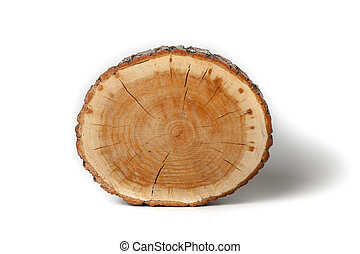 Cross section of tree trunk on white background - Cross...