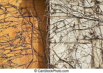 Autumn climbing plant wall texture background