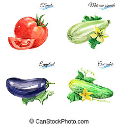 Watercolor vegetables isolated on white background for...