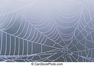 Spiderweb early in the morning on the grass with dew drops