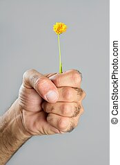 Concept and contrast of hairy man hand and flower - Concept...