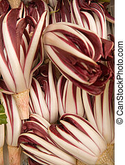 "Red italian chicory - Red chicory of ""Treviso\"" (Cichorium..."