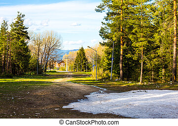 Spring in the woods. Snow and green trees - Spring has...