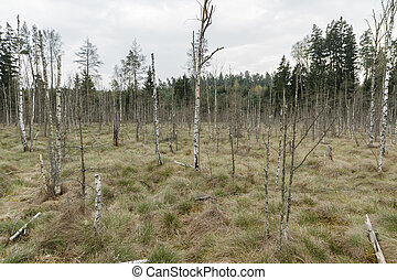 trees in swamp - Lithuanian wetland nature reserve in...