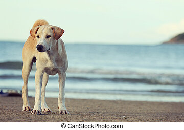 Dog standing on the beach and vintage tone