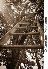 Lange garden stairs at cherry as old photo - Lange garden...