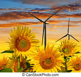 Sunflower field with wind turbines at sunset