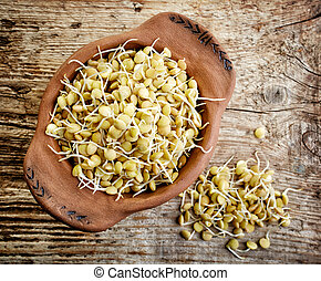 sprouted lentil seeds - bowl of sprouted lentil seeds on...