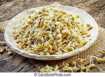 sprouted lentil seeds on old wooden table