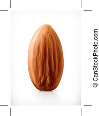 Almond vector icon - Almond vector icon, isolated on white...