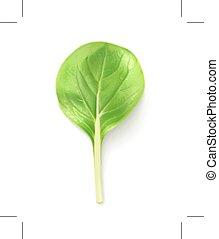 Baby salad leaf - Green baby salad leaf, vector illustration...
