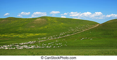 large flock of sheep grazing on the hill - a large flock of...
