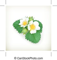 Strawberry plant illustration - Strawberry plant, vector...